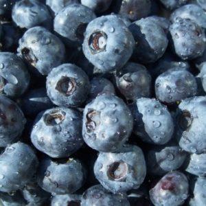 FreshBlueberries1