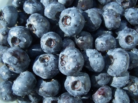 Organic Blueberries!
