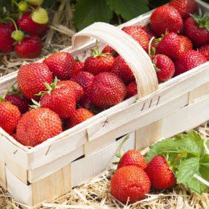 Field Strawberry